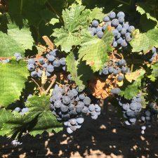 Les activités vinicoles de l'automne en un clin d'oeil