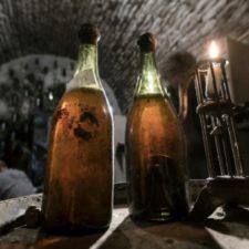 Le savagnin du Jura, vieux d'au moins 900 ans